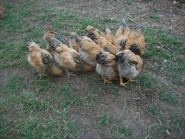 Tickens!!!
