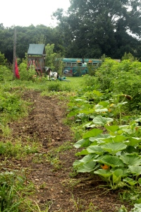 Planting for a fall crop has begun, winter squash, pumpkins and beans newly planted. Playground in background